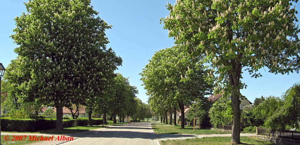 Allee in Hilsbach